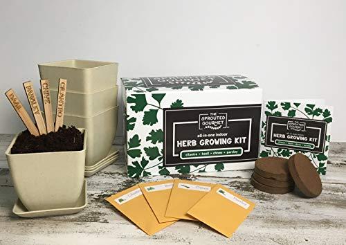 Herb Garden Starter Kit Indoor Diy Kit For Growing Basil Cilantro Parsley Chives From Seeds Complete Guide Bonus Herb Stripper Indoor Herb Garden By Cherish Garden Buy Online
