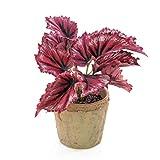 artplants.de Künstliche Blattbegonie Benita im Tontopf, 12 Blätter, rot, 22cm - Kunst Schiefblatt - Deko Begonien