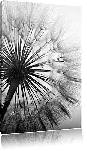 Pixxprint Schöne Pusteblume Schwarz/Weiß, Format: 60x40 auf Leinwand