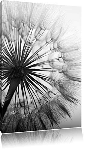 Pixxprint Schöne Pusteblume Schwarz/Weiß, Format: 80x60 auf Leinwand