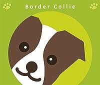 見つめる ボーダーコリー チョコ & ホワイト 犬 ステッカー グリーンバック
