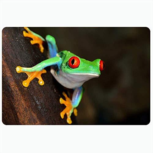 LIS HOME Badteppich für Badezimmer rutschfeste Matten Redeye Laubfrosch Agalychnis South Callidryas Terrarium Tiere Wildlife Tropics Vine Verschiedenes Plüsch Dekor Fußmatte rutschfeste Rückenmatte