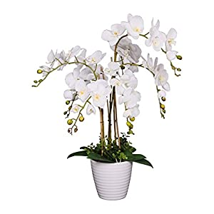 AMERIQUE Unique and Gorgeous Phalaenopsis Orchid Artificial Plant, Silk Flowers with Real Touch Leaves, with Nursery Pot, 2.5′, White