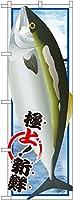 ぶり 絵旗 のぼり SNB-1550(受注生産)
