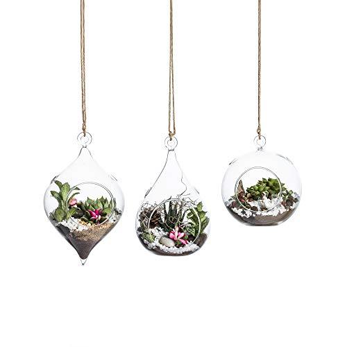 Whole Housewares Glass Hanging Terrarium Set
