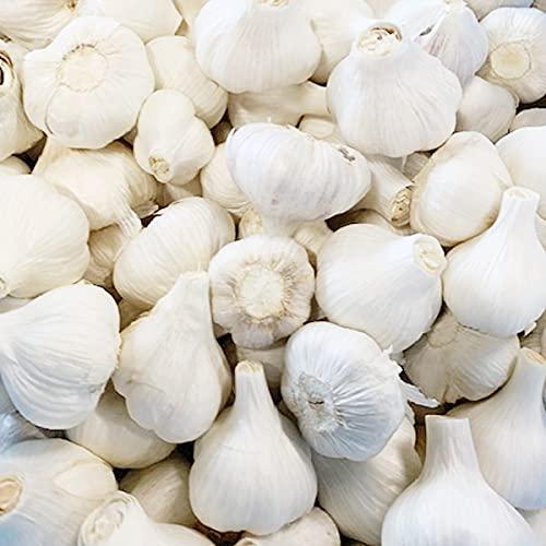 国華園 香川産 ご家庭用 新にんにく 乾燥 1kg 規格外 食品