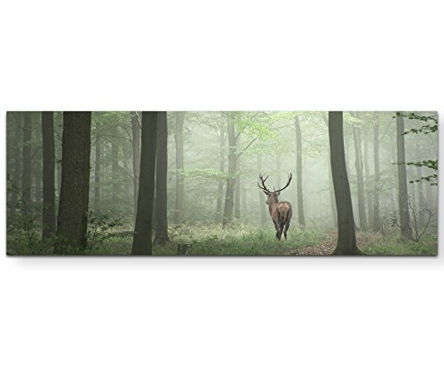 Paul Sinus Art Leinwandbilder | Bilder Leinwand 150x50cm Hirsch im Wald