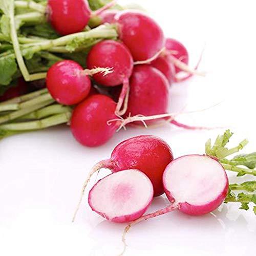 Four Seasons Cherry Zanahoria Semillas Vegetales de alto rendimiento Colza Semillas de zanahoria de frutas pequeñas 300