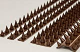 the Cactus Cat Intruder Deterrent Repellent Wall Fence Spikes: Pack of 10 (4.5M to 13.5M) - BROWN