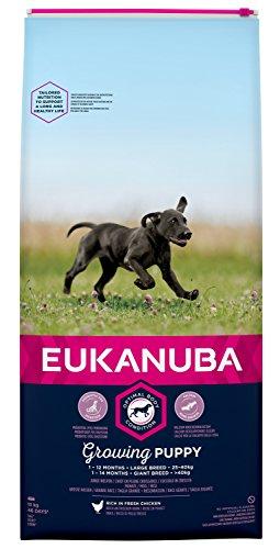 Eukanuba Puppy Trockenfutter für große Welpen mit frischem Huhn, 15kg