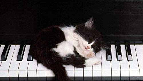 LWEEHNF Puzzle 1000 Stück Erwachsene Kinder Puzzle Schwarz-Weiß-Katze auf Klavier Holzpuzzle Freizeit Kreative Geschenke Kunstspiele Spielzeug DIY Heimtextilien Größe: 75 50cm (L076)