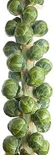 kale seedlings for sale
