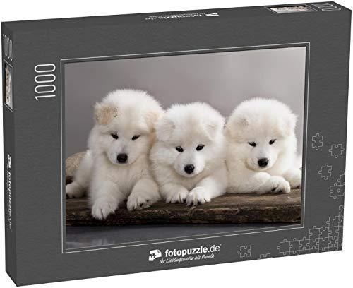 Puzzle 1000 Teile lustige Welpen von Samojeden-Hund (oder Bjelkier) - Klassische Puzzle, 1000 / 200 / 2000 Teile, edle Motiv-Schachtel, Fotopuzzle-Kollektion \'Tiere 2\'