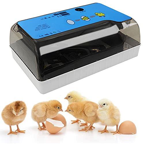 LIVHOOU Couveuse œufs Automatique Incubateur 12 œufs poules Retournement auto Contrôle de l'Humidité et de Température pour Incuber œufs de Poule Caille de Canard