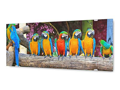 KD Dsign+ glasschilderij muurschildering GLX12551943371 papegaai vogels 125 x 50 cm/incl. nieuw ophangsysteem