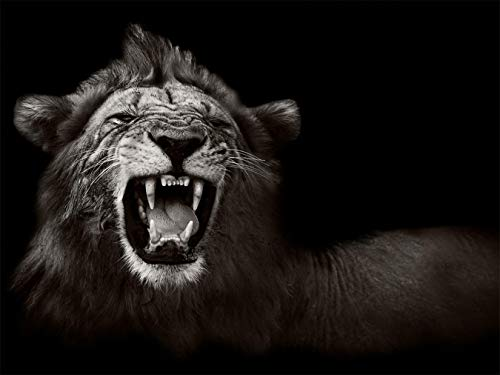Fototapete selbstklebend | König der Tiere | in 265x200 cm | Bild-tapete Moderne Wand-deko Dekoration Wohnung Wohnzimmer Wandtapete schwarz-weiß| 501265