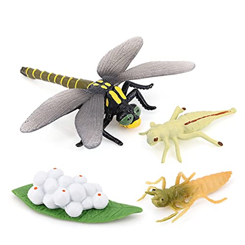 Dragonfly Growth Cycle, Animal Growth Cycle Biological Model Toy Decoration, Growth Stage Lifelike Dragonfly Life Cycle Model Set for Kids Education Insect Themed Party Favors