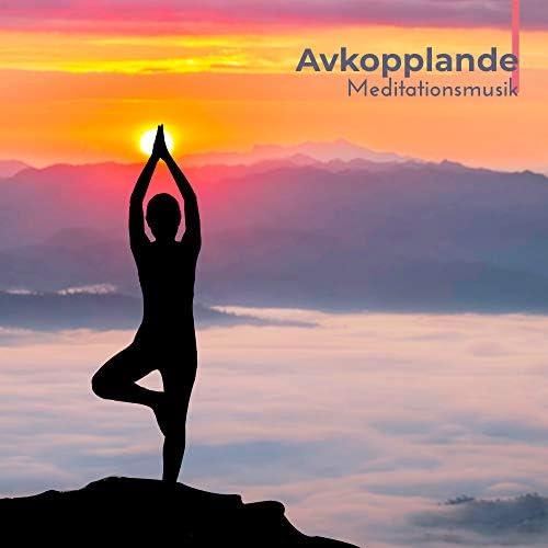 Yin Yoga Academy & Afslappende Musik Zone