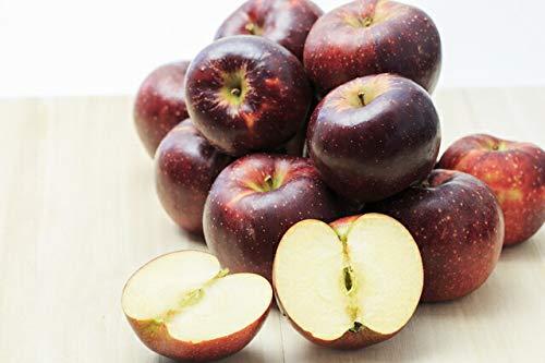 訳あり 減農薬 長野 秋映 りんご 約9kg 24〜50個入 C品 リンゴ 林檎 秋映え 産地直送 小山 SSS 10t