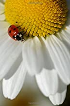 Red Ladybug on a White and Yellow Daisy Nature Journal: 150 Page Lined Notebook/Diary