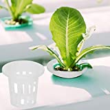 Canasta hidropónica Segura Transpirable 10pcs / Set Canasta hidropónica de jardín sin Suelo para plantación de Jardines para acuaponia Suministros para Sistemas hidropónicos de(White)