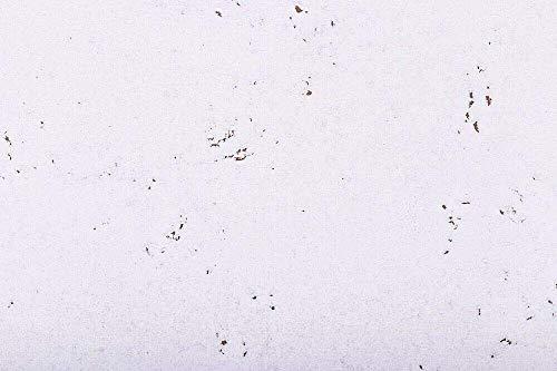 Kork Wandfliesen Deko Schnee 60cm x 30cm (22 Fliesen) Gesamt 3,96m²