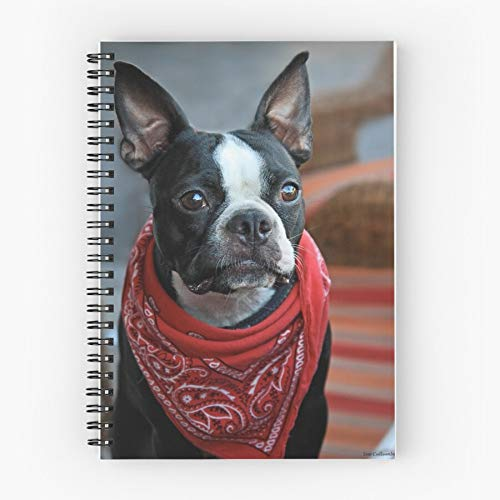 Boston Pet Animal Terrier Bandana Red Regal Dog Nettes Schul-Fünf-Sterne-Spiral-Notizbuch mit haltbarem Druck