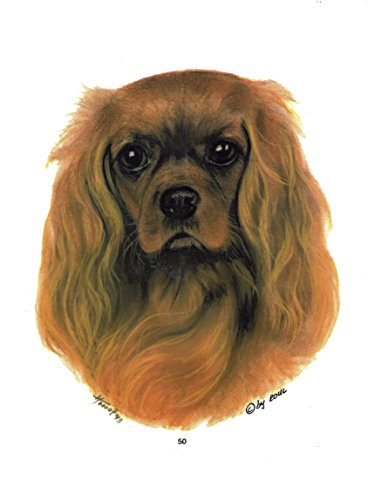2 Stickers Hond - Cavalier Koning Karel Spaniel [r050]