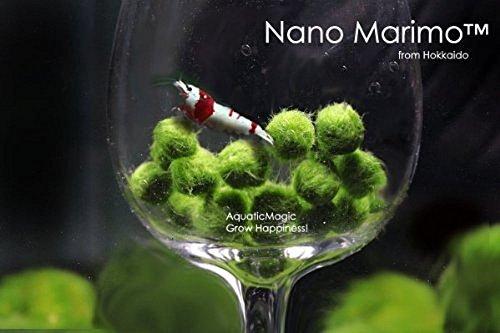 LUFFY Nano Marimo Moss Ball X 5 + 1 gratis! Aquarienwasserpflanze für Java Fisch / Garnelen Diffuser Co2 Fern Anubias Panzer