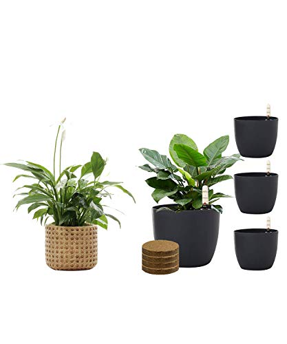 SAROSORA 6'' Self Watering Planter Pots with Coco Soil & Ceramic Flower Pots Cement Succulent Planter with Drainage Hole Weave Pattern