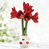 Love is in The Air Waxed Amaryllis Flower Bulb with Stand, No Water Needed