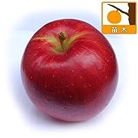 リンゴ:つがる(津軽)4~5号ポット[豊産性の大実中生種][苗木]