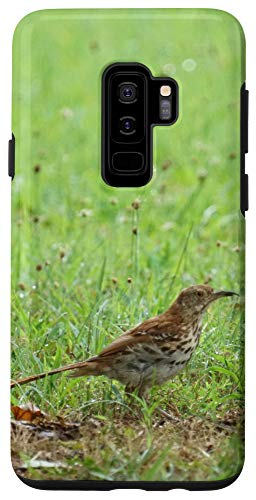 Galaxy S9+ Brown Thrasher Bird Beautiful Photo for Bird Lovers Case