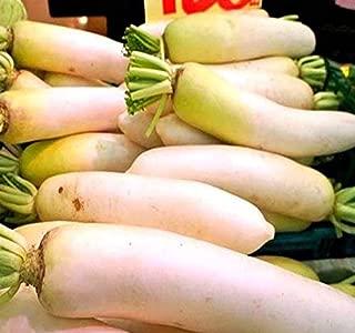 1 lb (29,000+ Seeds) Japanese Daikon - Daikon Radish Seeds - Japanese Radish - Non-GMO Seeds by MySeeds.Co (1 lb Japanese Daicon)