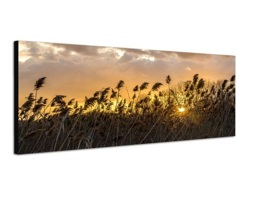 Middagssol skymning natur 150 x 50 cm bred bild som panorama på duk och kil ram redo att hänga upp – vår bredbild som panoramaer på duk imponerar med sina ovanliga format och det extremt detaljerade trycket av upp till 100 megapixel högupplösta panor
