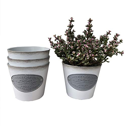 Ashley ZC Pack of 3 Vintage Succulent Cactus Planters,Rustic Country Style Round Plastic Flower Pot Container - Indoor or Outdoor Decor