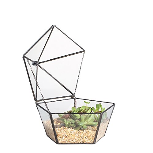 NCYP Modern Artistic Clear Glass Jewelry Box Geometric Pentagon Shape Succulent Moss Fern Plant Terrarium Display Planter Decor Tabletop Centerpiece Garden Vase Container with Swing Lid (NO Plants)