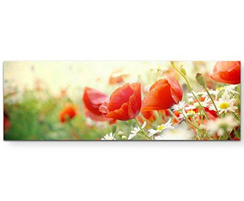 Paul Sinus Art Leinwandbilder | Bilder Leinwand 120x40cm Mohnblumen im Sonnenschein