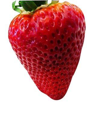 Riesen Erdbeere -Packung- (Gigantisch Große Erdbeeren, die größten der Welt) 20 Samen