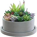 YRHH Macetas de Flores suculentas de Cemento Macetas Poco Profundas Vintage Macetas de bonsái de Cactus Contenedor de Flores para decoración de jardín de Interior al Aire Libre-Without Tray