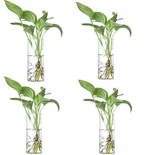 Vaso da fiori in vetro da appendere alla parete terrari per piante da interni, vaso da parete in vetro per piante d'aria, decorazione da parete, 4 pezzi (cilindrici)