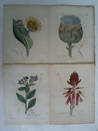Inula Helenium / Cynara Scolymus / Pulmonaria officinalis / Aloe perfoliata Socotorina - 4 handcolorierte Kupferstiche
