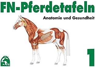 FN-Pferdetafeln Set / FN-Pferdetafeln Set 1: Anatomie und Gesundheit: Enthält Tafel 1 - 13: Für Pferde giftige Pflanzen. Zäumungen. Farben und ... Atmungsorgane. Lage erkennbarer Veränderungen