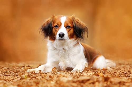 Puzzle 1000 piezas Pintura decorativa de perro mascota puzzle 1000 piezas clementoni Juegos familiares para adultos divertidos para niños Rompecabezas de juguete de descompres50x75cm(20x30inch)