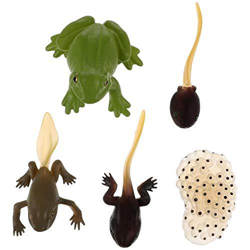 STOBOK 5 piezas ciclo de vida de la rana animal ciclo de vida kit mini figuras de insectos STEM ciencia biología crecimiento aprendizaje juguetes educativos para niños pequeños niños niños