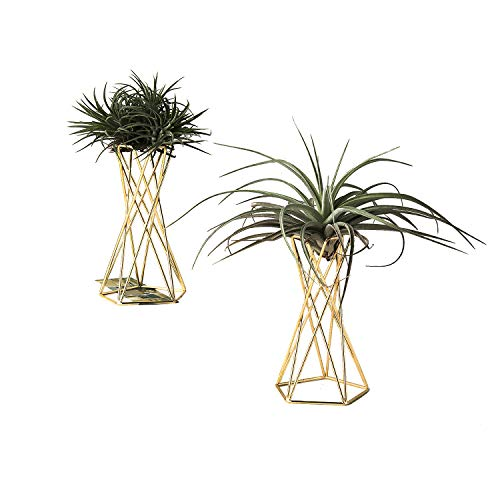 Air Plant Stand Air Plant Holder Tillandsia Holder Air Plant Display Stand Streptophylla Air Plant Stand, Pack of 2