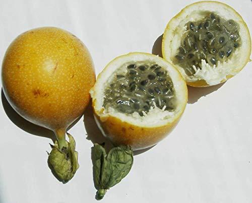Süße Granadilla (Passiflora ligularis) Frische Samen (Auswahl 10/20 Samen) (20)