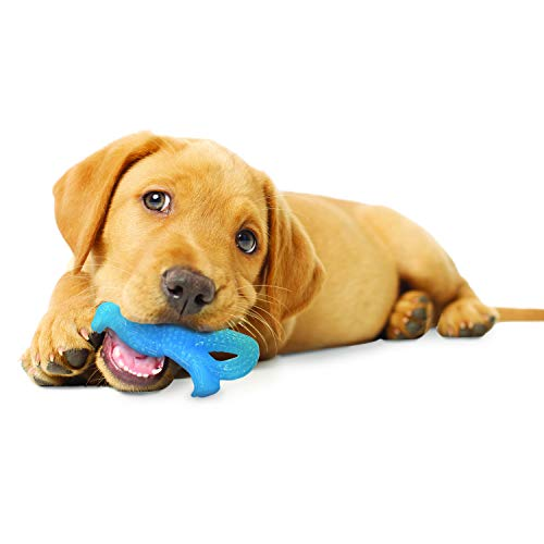 Nylabone Puppy Toy Bundle with Puppy Starter Pack, Puppy Chew Toys, Teething Chew Toys, and Bacon Puppy Treat