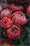 Raíz de Peonía,Plantas Preciosas Que Te Hacen Feliz,Muchos Colores,Hermosos Jóvenes,Plantas Ornamentales,Plantación De Jardines-1 Bulbo,1