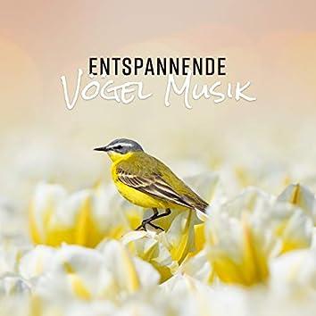 Entspannende Vögel Musik: Heilende Natur klingt nach Meditation, Wellness und Entspannung